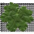 Festive Leaf 065