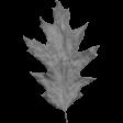 Leaves No.2 - Templates - Leaf 12