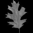 Leaves No.2 - Templates - Leaf 14