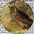 Picnic Day Flair - Owl