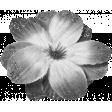 Flowers #02 - Templates - Flower 11