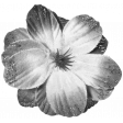 Flowers #02 - Templates - Flower 12