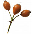 Secret Garden - Elements - Berries