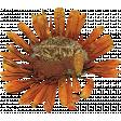 Secret Garden - Elements - Dried Flower