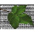 Secret Garden - Elements - Leaf