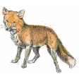 Secret Garden - Elements - Watercolour Fox