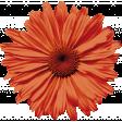 Pumpkin Spice - Minikit - Flower Big