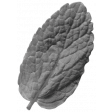 Leaf 021