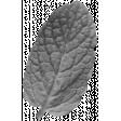 Leaf 023