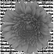 Flower 029