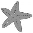 Starfish Sticker Template