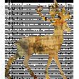 Animal Kingdom - Deer 1