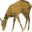 Animal Kingdom - Deer