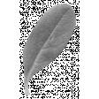 Leaves - Templates - Leaf 7