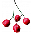 Christmas Day - Elements - Berries 01