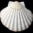 Unwind - Elements - Seashell