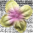 Flowers No.7  - Flower 1