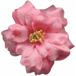 Flowers No.8  - Flower  2