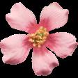 Flowers No.8  - Flower  3