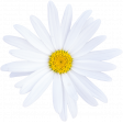 Summer Day Elements - Daisy