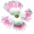 Summer Day Elements - Flower 2