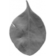 Leaves No. 2 - Leaf Template 4