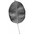 Leaves No. 2 - Leaf Template 6