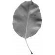 Leaves No. 2 - Leaf Template 8