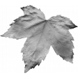 Leaves No.1 – Template 1