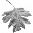 Leaves No.1 – Template 9