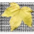 Leaves No.1 – Leaf 1