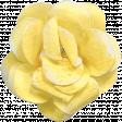 Flowers No.14 - Flower 2