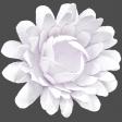 Flowers No.18 – Flower 2