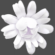 Flowers No.18 – Flower 4