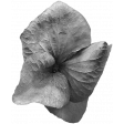 Flowers No.19 Flower 11 Template