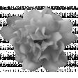 Flowers No.21 Flower 2 - Template
