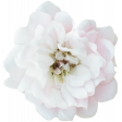 Flowers No.21 Flower 3