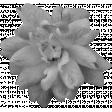 Flowers No.21 Flower 4 - Template