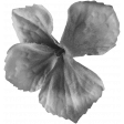 Flowers No.22 Flower 2 - Template