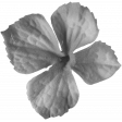 Flowers No.22 Flower 3 - Template