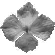 Flowers No.22 Flower 4 - Template