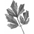 Leaves No.8 Leaves 3 - Template