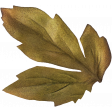 Leaves No.8 Leaves 7