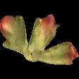 Leaves No.8 Leaves 9