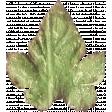 Leaves 07-11