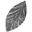 Leaves 07-02 Template