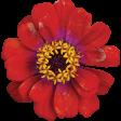 Flowers No. 25-01