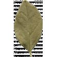 Leaves No.10 – Leaf 06