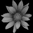 Flowers No.26 – Flower 01 Template