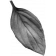 Flowers No.26 – Leaf 05 Template